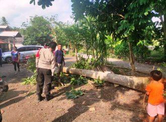 Warga Kampung Yayasan Tertimpa Pohon Kelapa PTPN VIII Garut